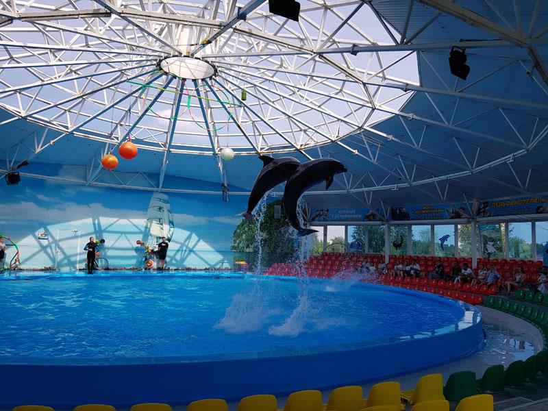 Минский зоопарк: шоу дельфинов