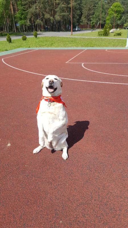 Лидер: собака Белла, главный участник канис-терапии
